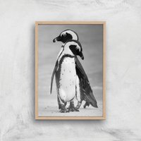 A Couple Of Penguins Giclee Art Print - A2 - Wooden Frame