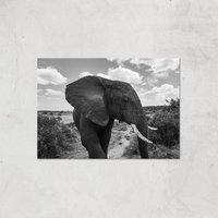 Majestic Elephant Giclee Art Print - A2 - Print Only