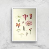 Researching Flowers Giclee Art Print - A2 - White Frame