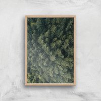 Pine Forest Giclee Art Print - A3 - Wooden Frame