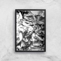 Petals In Mono Giclee Art Print - A2 - Black Frame