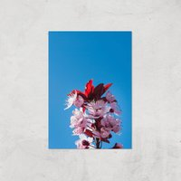 Blue Cherry Blossoms Giclee Art Print - A2 - Print Only