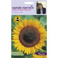 Sarah Ravens Sunflower Taiyo Seeds