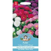 Aster Colour Carpet Mixed Seeds