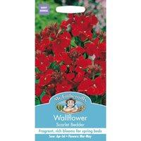Wallflower Scarlet Bedder Seeds