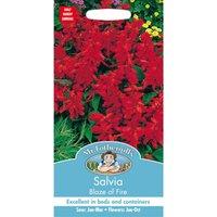 Salvia Blaze Of Fire (Salvia Splendens) Seeds