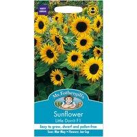 Mr. Fothergills Sunflower Little Dorrit F1 Seeds