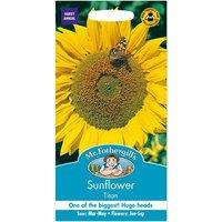 Mr. Fothergills Sunflower Titan Seeds