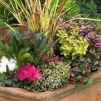 Autumn/Winter Planted Trough (Autumn/Winter Planted Trough)
