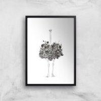 Balazs Solti Ostrich Art Print - A4 - No Hanger