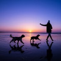 Bespoke Outdoor Photoshoot for Dogs - Outdoor Gifts