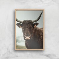 How Now Brown Cow Giclee Art Print - A4 - Wooden Frame - Cow Gifts