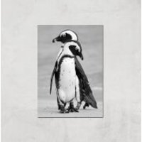 A Couple Of Penguins Giclee Art Print - A4 - Print Only - Penguins Gifts