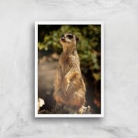 Sitting Meerkat Giclee Art Print - A4 - White Frame - Meerkat Gifts