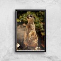 Sitting Meerkat Giclee Art Print - A4 - Black Frame - Meerkat Gifts