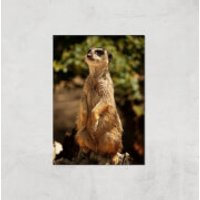 Sitting Meerkat Giclee Art Print - A3 - Print Only - Meerkat Gifts