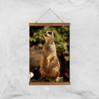 Sitting Meerkat Giclee Art Print - A3 - Wooden Hanger - Meerkat Gifts