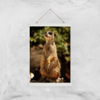 Sitting Meerkat Giclee Art Print - A3 - White Hanger - Meerkat Gifts