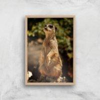 Sitting Meerkat Giclee Art Print - A3 - Wooden Frame - Meerkat Gifts