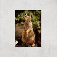 Sitting Meerkat Giclee Art Print - A2 - Print Only - Meerkat Gifts