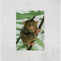 Those Big Brown Eyes Giclee Art Print - A2 - Print Only - Brown Gifts