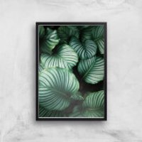 Leaves From Above Giclee Art Print - A2 - Black Frame