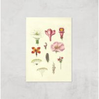 Researching Flowers Giclee Art Print - A4 - Print Only - Flowers Gifts