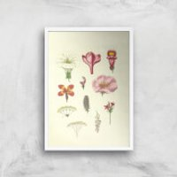 Researching Flowers Giclee Art Print - A4 - White Frame - Flowers Gifts