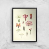 Researching Flowers Giclee Art Print - A4 - Black Frame - Flowers Gifts