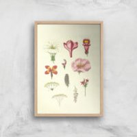 Researching Flowers Giclee Art Print - A2 - Wooden Frame - Flowers Gifts