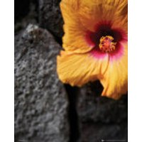 Flowers Stone Wall - Mini Poster - 40 x 50cm