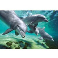 Dolphins Underwater - Maxi Poster - 61 x 91.5cm