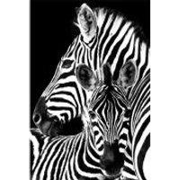 Zebra - Maxi Poster - 61 x 91.5cm - Zebra Gifts