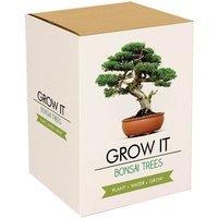 Grow It Bonsai Tree - Gadgets Gifts