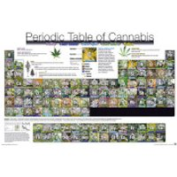 Periodic Table of Cannabis - 61 x 91.5cm Maxi Poster - Cannabis Gifts