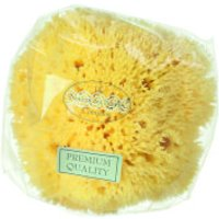 Hydrea London Honeycomb Sea Sponge, Size 4 - 4.5
