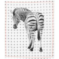Cotton Tea Towel - Zebra - Zebra Gifts