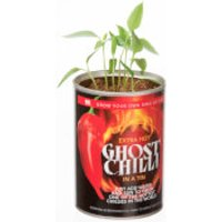 Grow Your Own Ghost Chilli - Chilli Gifts