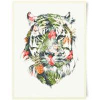 Robert Farkas Tropical Tiger Art Print - Tiger Gifts