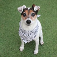 Dalmatian Dog Bandana - Pets Gifts