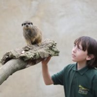Meet and Feed the Meerkats at Millets Falconry Centre - Falconry Gifts