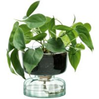 LSA Canopy Clear Self Watering Planter - 13cm