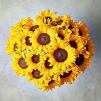 Large British Sunflowers Yellow or orange