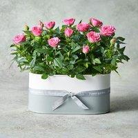 Pink Rose Planter Pink