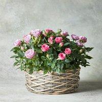 Large Rose Basket Pink