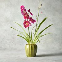 Miltonia Orchid Pink