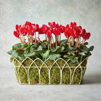 Vintage Red Cyclamen Garden Planter Red