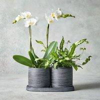Mini Twin Stem Orchid Duo Jar White