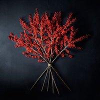 Premium red amaryllis Red