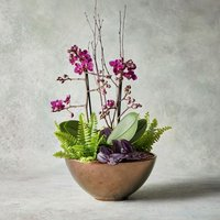 Fantasia Orchid Planter Pink